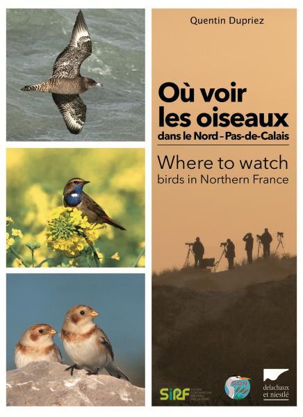 Où voir les oiseaux dans le Nord – Pas-de-Calais