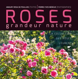 Roses grandeur nature