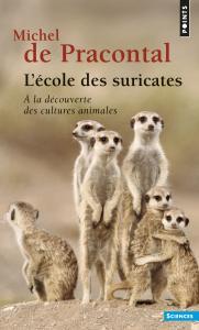 L'Ecole des suricates